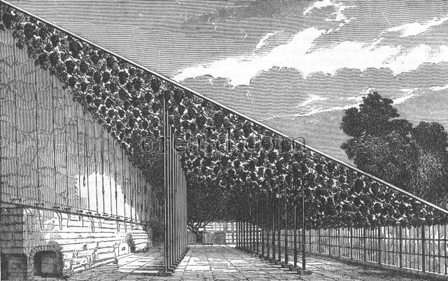 The vinery at Hampton Court