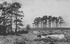 A VIEW OF CAMP HILL IN ASHDOWN FOREST, SUSSEX WEALD