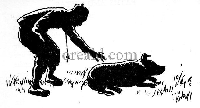 a dissertation upon roast pig by charles lamb A dissertation upon roast pig by charles lamb lamb (1775-1834) was an english essayist reprinted here is the first part of his essay, the part which tells the story.