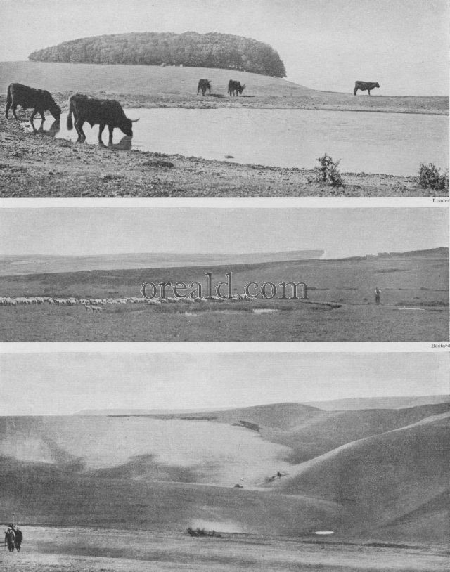 THE DEW-PONDS FOR SHEEP AND CATTLE OF THE SUSSEX DOWNS